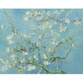 080 Branches d'amandier
